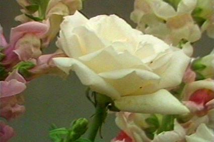 ''Des fleurs''